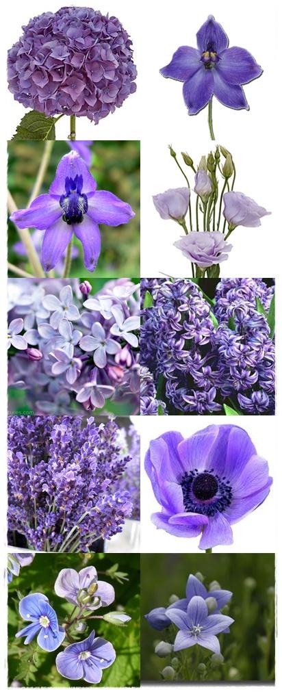 Here are 10 of my favorite wedding flowers in purple Hydrangea larkspur