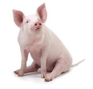 Carne de Porco Estufada com Castanhas  Porco