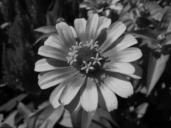 [flower-powerpb]