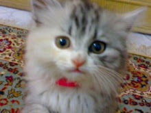 de ba2a kitty katakeety el sokar te3ma ya nas
