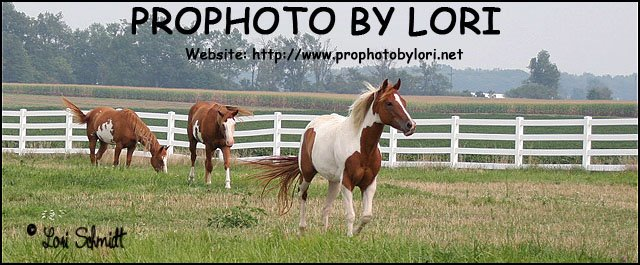Photo a day Blog, soon to become Horses, Meatless Diet and Vegetable Gardens