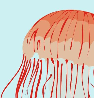 orange jellyfish illustration