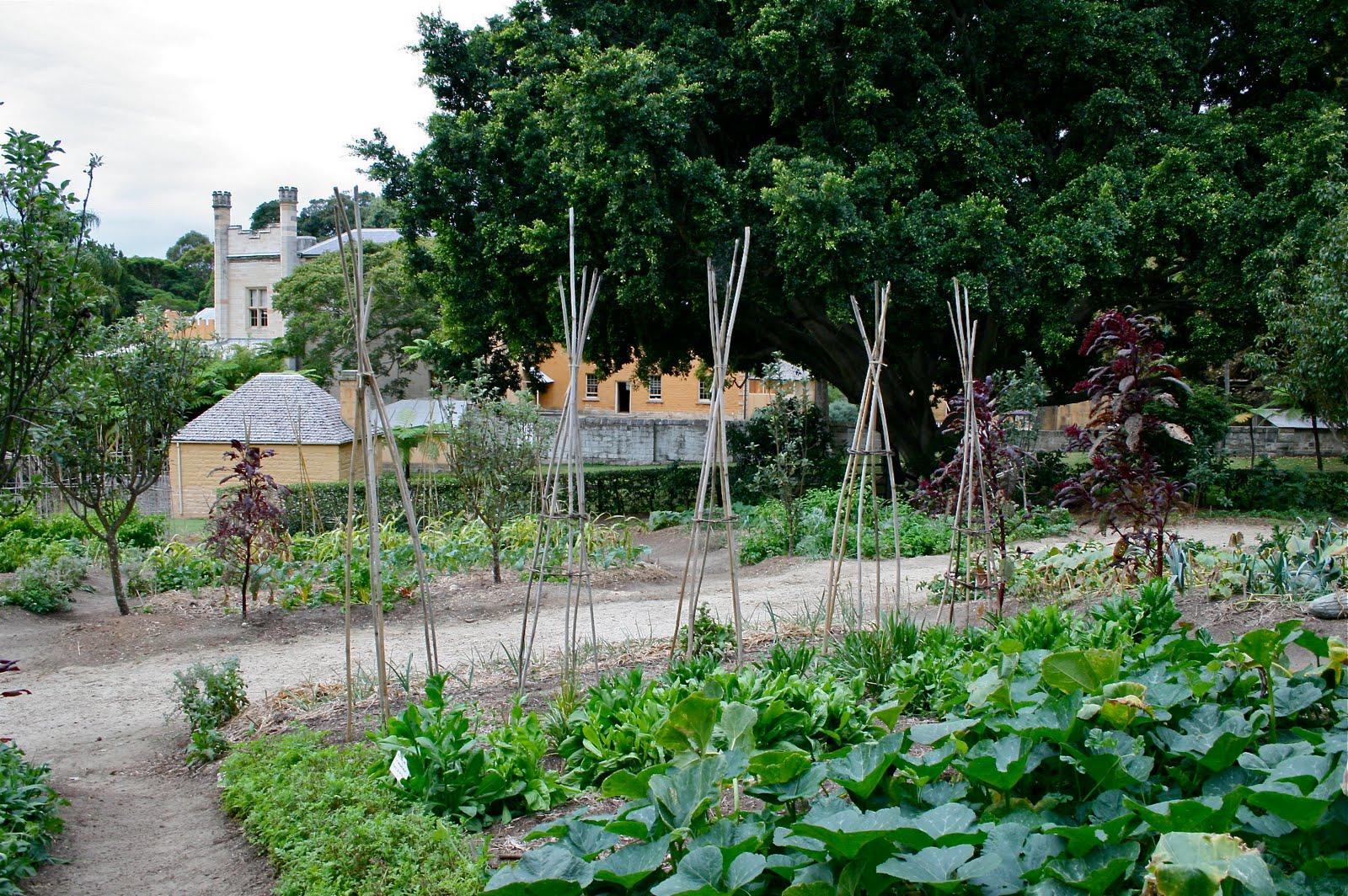 Kitchen Garden Blog Irish Wattle Blog Lovely Vaucluse House