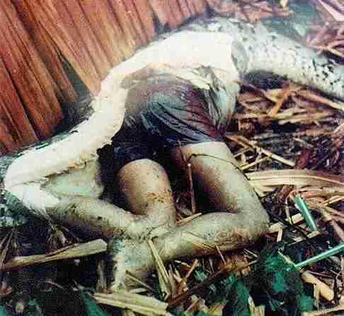 gambar ular terbesar di dunia makan orang