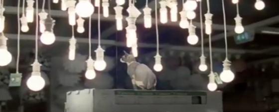 Des chats chez Ikea