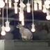 Lâcher de chats chez Ikea