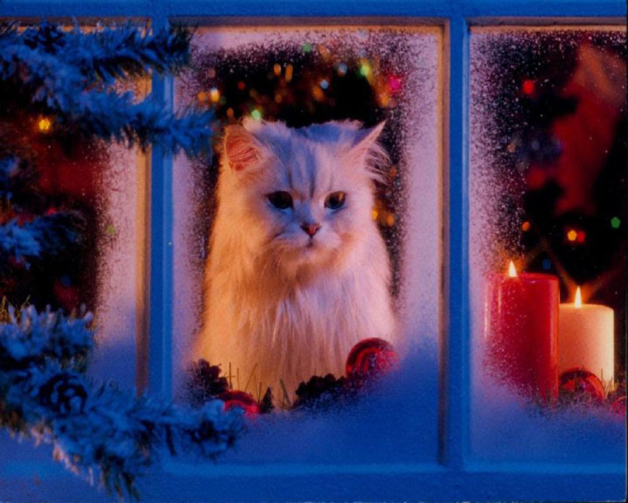 http://1.bp.blogspot.com/_3BgevQC_ErM/TQvvdd_xIfI/AAAAAAAAAM8/yxrSsDm5qlk/s1600/cute-cat-wallpaper-source_saz.jpg
