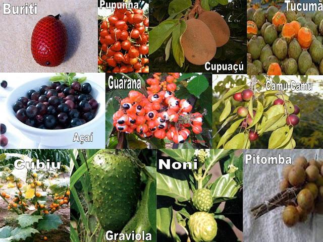 [frutas+do+Amazonas.jpg]