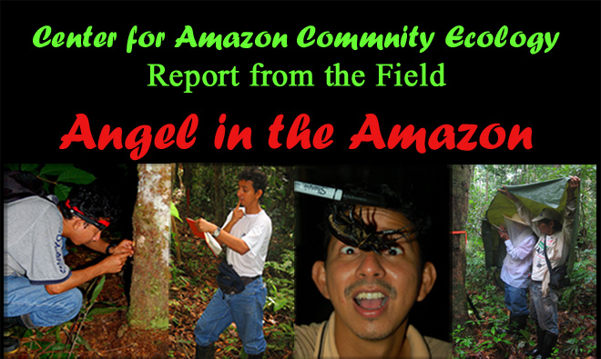 Angel in the Amazon