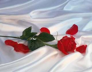 Cama de Rosas Rosas