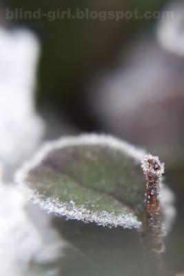 white frost hoarfrost