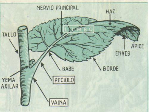 Ciencias naturales for Significado de un arbol sin hojas