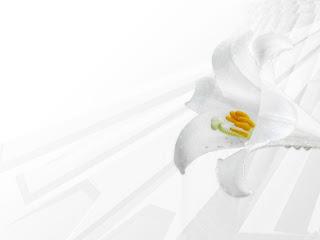 Planos De Fundo Flores
