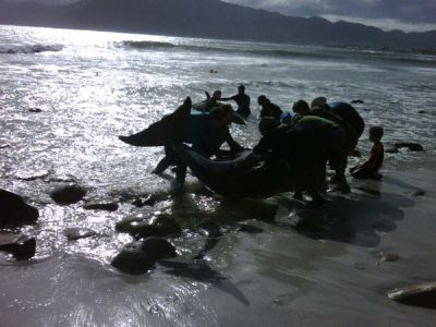 Whales beach at Kommetjie