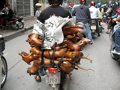 Vietnam, Transportation, Bicycle, Motorcyle, Tricycle, Dogs