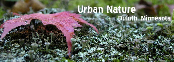 Urban Nature: Duluth, MN