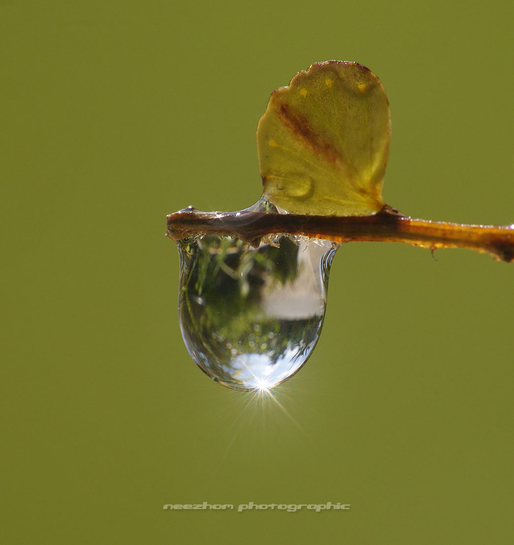 Water drop and refraction on a fern tree branch with sun sparkle