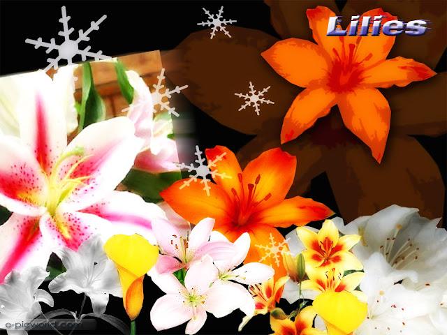 lilies wallpaper 1