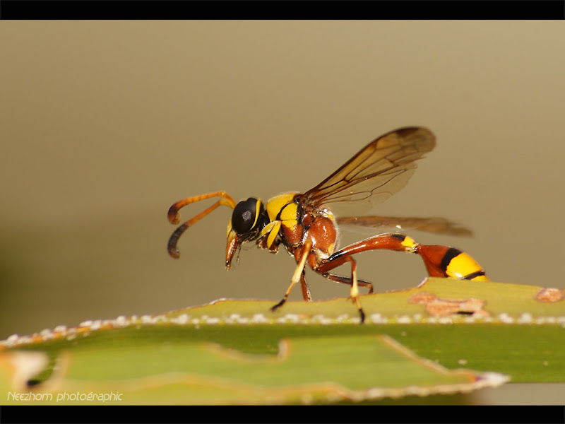 wasp on a palm tree insect picture