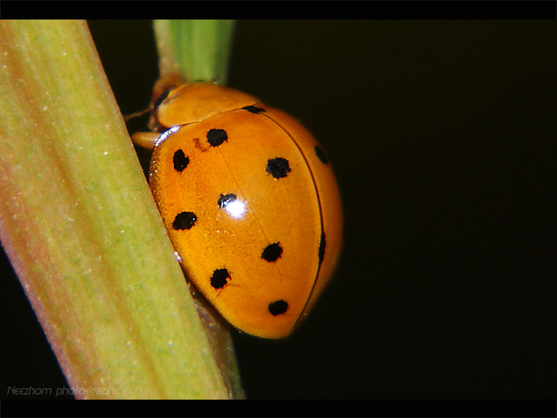 Variety of LadyBirds photo