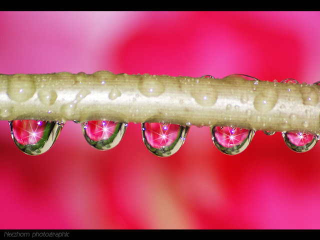 pink water drops picture