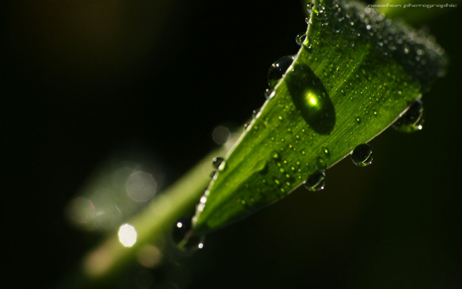 Dew drops and caustic behind the leaf