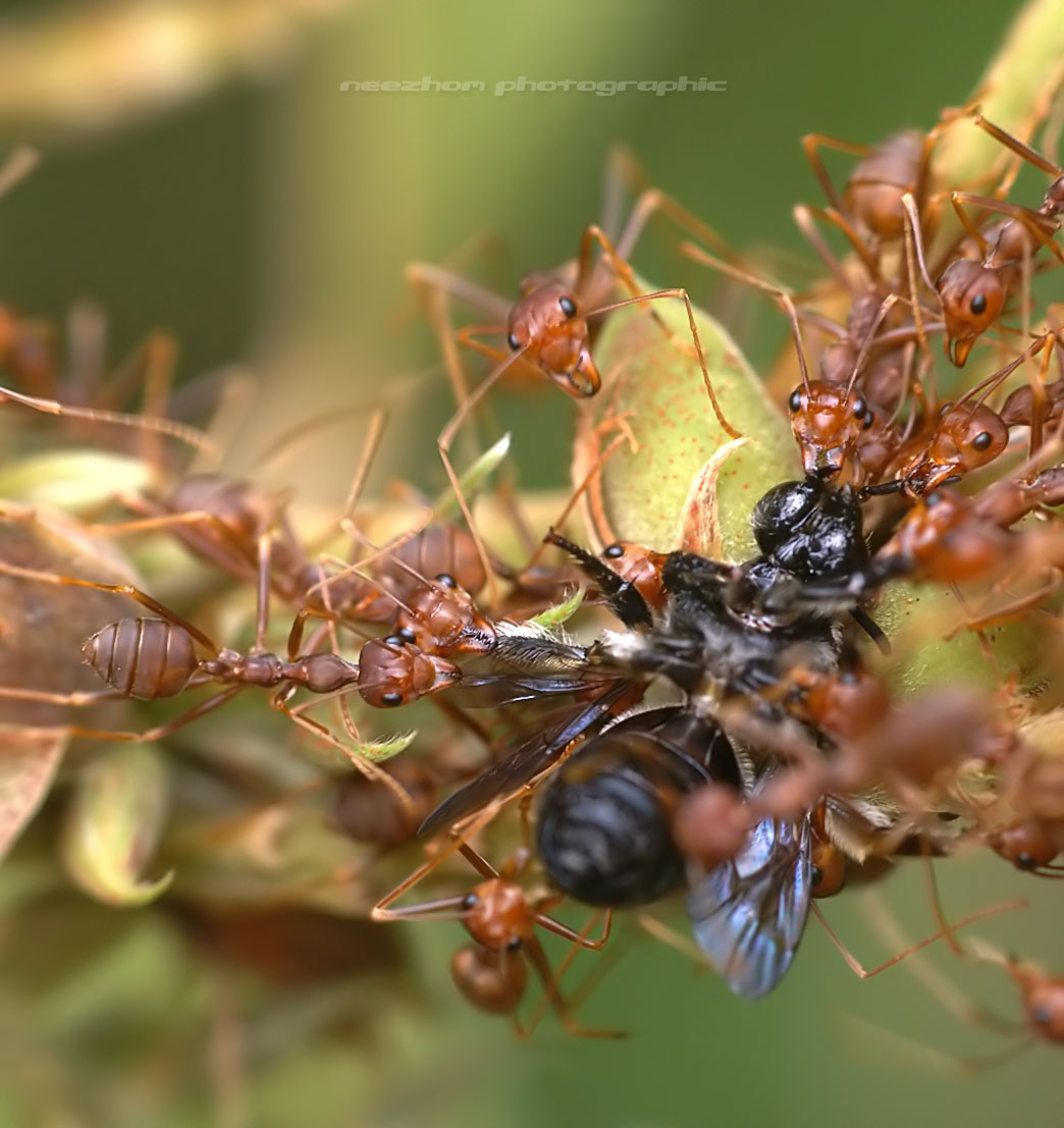 10 pictures of spiders and insects eat other insects ...