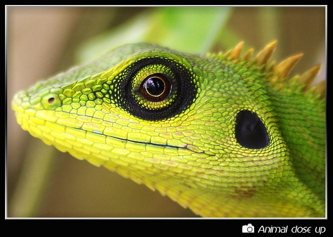 Animal close up photo gallery - Neezhom Photomalaya