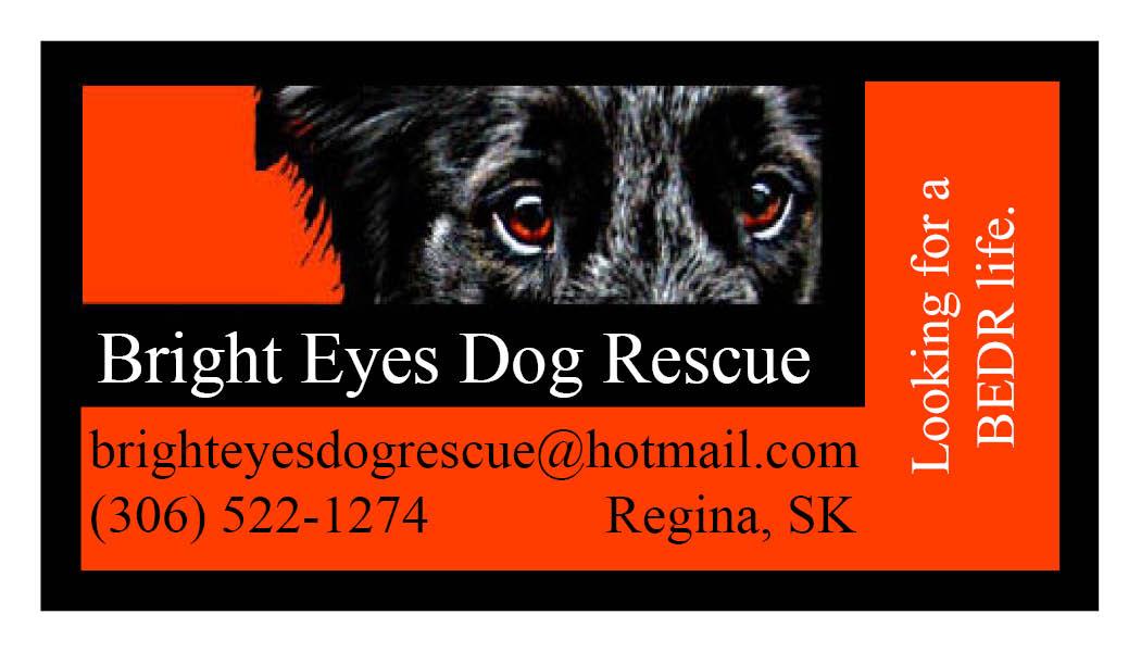 Graphics portfolio bright eyes dog rescue business card letter head bright eyes dog rescue business card letter head reheart Choice Image