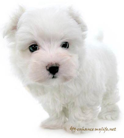 Cute Puppies Pictures on Cute Dog Breeds