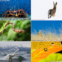 wildlife photographer of the year entries