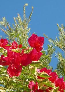 bright botany