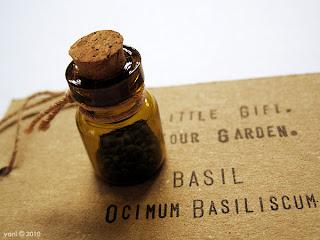 ocimum basiliscum