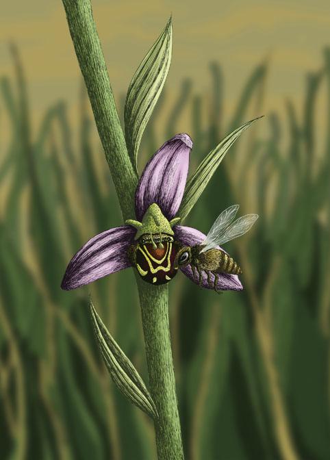"""réalisation d'une couverture de livre: """"l'abeille et l'orchidée"""", de Loïc Quintin"""