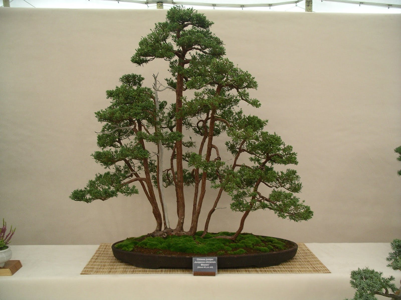 Newbury And District Bonsai Society