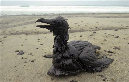 the oil spill is affecting animals but If these animals are included in the tally, then it can be estimated that up to 25,900 marine mammals may have been harmed by the oil spill to date fish it is difficult to conceive of how many fish have been killed by the gulf disaster.
