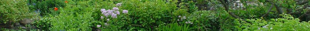 May's Garden