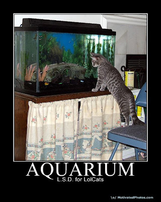 Aquarium Demotivational Poster