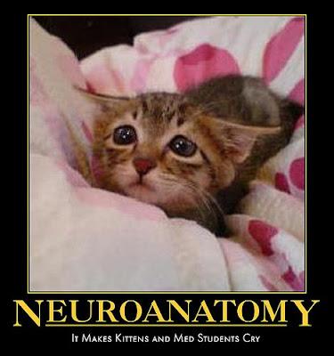 Neuroanatomy Demotivational Poster
