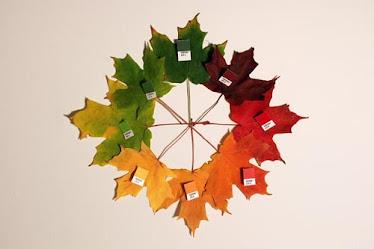 Círculo cromático com folhas