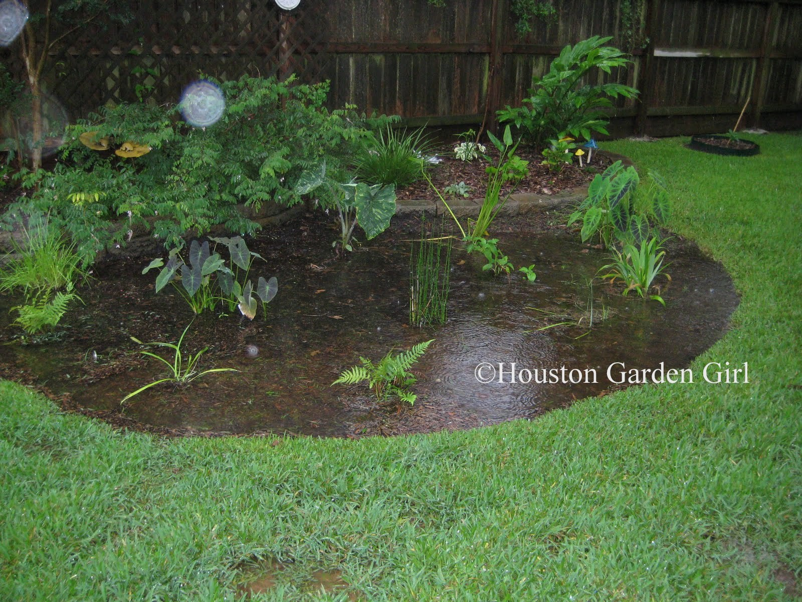 thursday july 1 2010 - Houston Garden