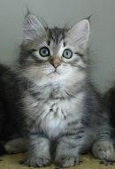 Aikaisempia pentuja - Former kittens