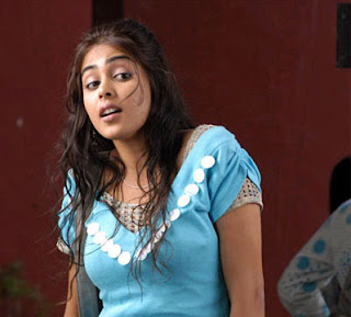 04genelia hot kollywood actress pictures21012009