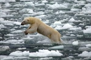 polar bear photo from Sierra Club blog