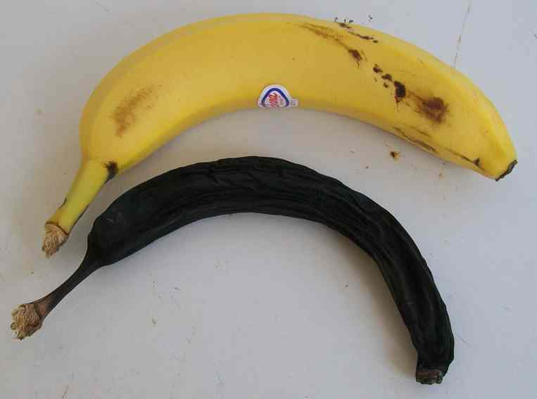 [bananas.jpg]