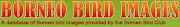 Borneo Bird Images: