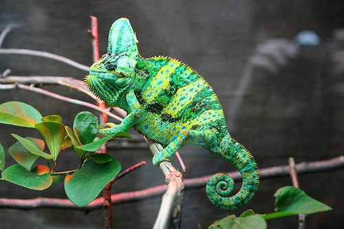 Common Illnesses Of Your Chameleon  Our Pets, We Love 'em. Square Root Signs Of Stroke. Positive Signs Of Stroke. Diseased Kidney Signs Of Stroke. Guest Bedroom Signs. Taurus Signs Of Stroke. Pediatric Appendicitis Signs Of Stroke. Kid Zone Signs Of Stroke. Mental Illness Signs