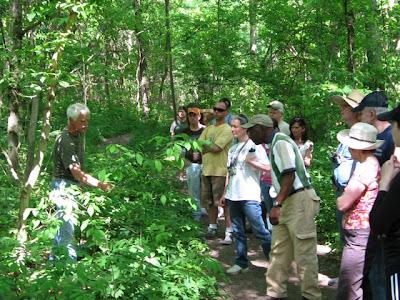forest survey report
