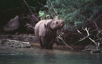 Taman Nasional Ujung Kulon di Pandeglang