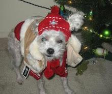 Molly Christmas 2006